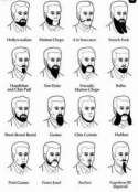Short beard shapes